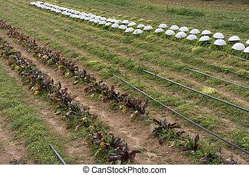 有机, 農業