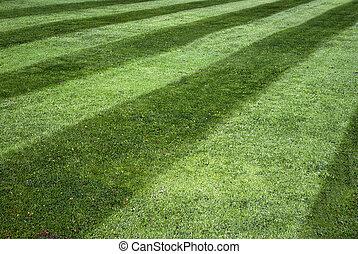 有条纹, 草坪
