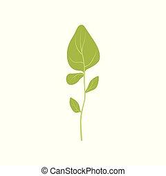 有機体である, オレガノ, 健康, 葉, 菜食主義者, 料理の食品, 芳香がする, ベクトル, 緑, イラスト, 背景, ハーブ, 新たに, 白