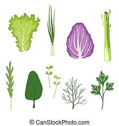 有機体である, サラダ緑, セット, 葉, 料理, 健康, ハーブ, ベクトル, 背景, イラスト, 菜食主義者, 白, 葉が多い野菜