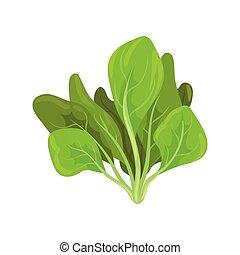 有機体である, サラダ, ほうれんそう, 健康, 菜食の食物, ハーブ, 葉, ベクトル, イラスト, 背景, 新たに, 白
