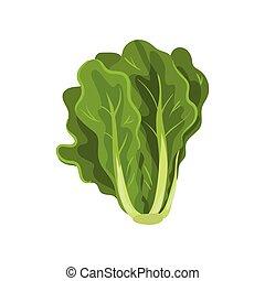 有機体である, サラダ, 健康, 菜食の食物, イラスト, 葉, ベクトル, 緑の背景, 新たに, 白