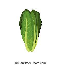 有機体である, サラダ, 健康, 菜食の食物, イラスト, 葉, ベクトル, 背景, romaine, 新たに, 白
