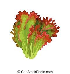 有機体である, サラダ, 健康, 菜食の食物, イラスト, 葉, レタス, ベクトル, 緑の背景, 新たに, 白