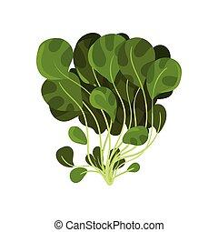 有機体である, サラダ, 健康, 菜食の食物, イラスト, 葉, mache, ベクトル, 背景, 新たに, 白