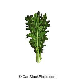 有機体である, サラダ, 健康, 菜食の食物, ハーブ, 葉, arugula, ベクトル, イラスト, 背景, 新たに, 白