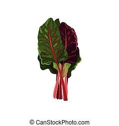 有機体である, サラダ, 健康, mangold, 菜食の食物, イラスト, 葉, ベクトル, 背景, 新たに, 白