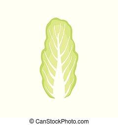 有機体である, 中国語, 健康, 菜食主義者, 料理の食品, イラスト, ベクトル, 背景, キャベツ, 野菜, 白, 葉が多い