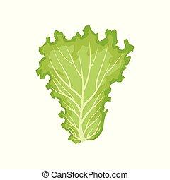 有機体である, 健康, 葉, 菜食主義者, 料理の食品, イラスト, レタス, ベクトル, 背景, 野菜, 白, 葉が多い
