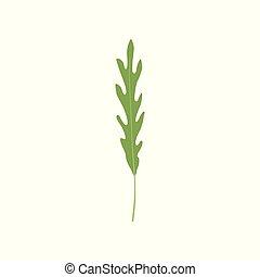 有機体である, 健康, 葉, 菜食主義者, 料理の食品, 芳香がする, arugula, ベクトル, 緑, イラスト, 背景, ハーブ, 新たに, 白