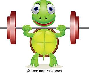 有趣, 海龜, 舉起, barbell
