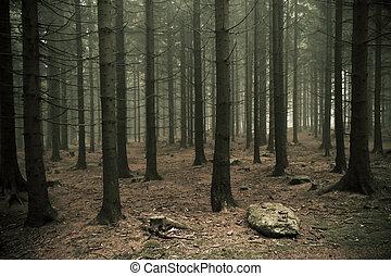 有霧的森林