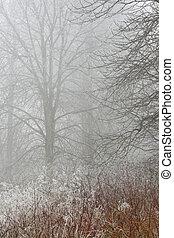 有霧, 樹林