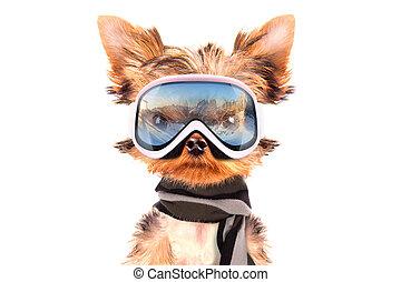 服を着せられる, 犬, スキーヤー