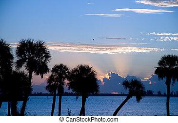 朝, フロリダ