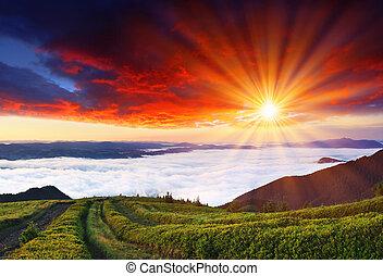 朝, 中に, 山