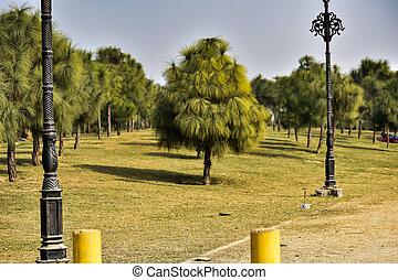 朝, 新たに, 木, plant., 美しい, 草, 緑のフィールド, ライト