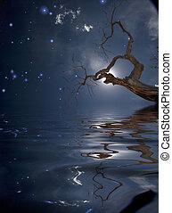 木の反射, 星