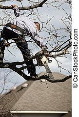 木の トリミング