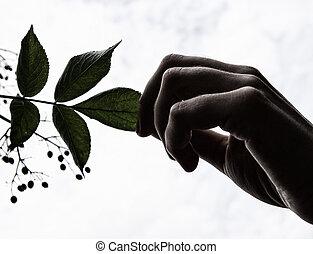 木の 葉, 手を持つ