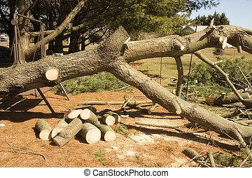 木を根こそぎにした