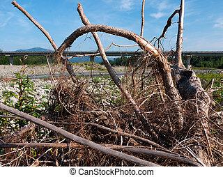 木を根こそぎにした, -, 損害, 洪水, 残骸, 定着する