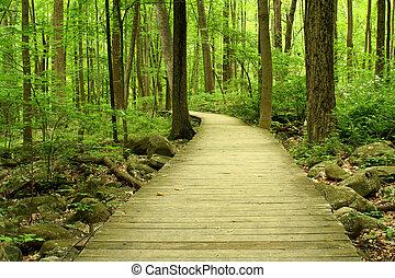 木制的桥梁, 树林