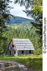 木制, 山, 很少, 森林, 房子