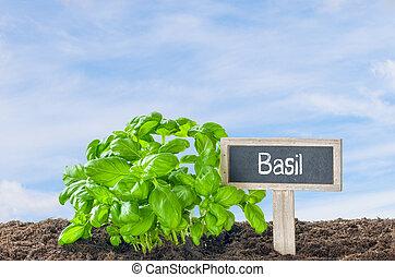 木制,  basil, 花園, 標簽