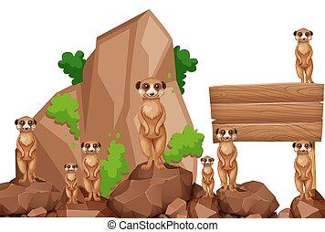 木制, meerkats, 岩石, 簽署