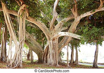 木星, 佛羅里達, 樹