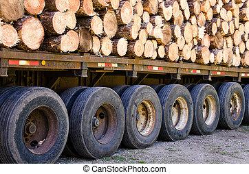 木材を伐採する, 松
