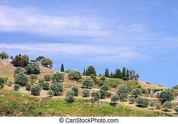 木立ち, カラブリア, オリーブ