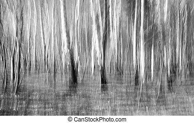 木立ち, 抽象的, シラカバ