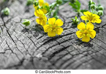 木製である, ハーブ, 花, 古い, 背景