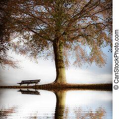 木製である, 公園, 秋, 古い, ベンチ