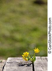 木製である, 春の花, 黄色