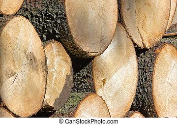 木製である, 木材を伐採する