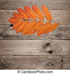 木製である, 紅葉, 赤い背景