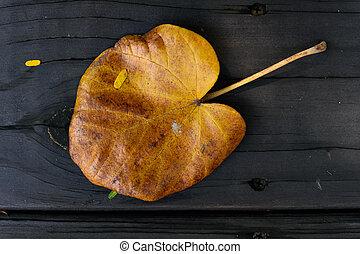 木製である, 落ちている, 床, 葉