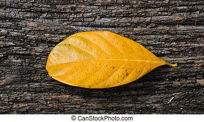 木製である, 葉, 古い, 背景, 黄色