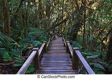 木製の橋, 森林