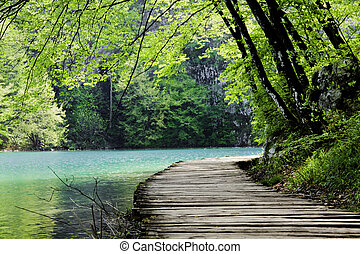 木道, 近くに, a, 森林, 湖