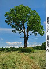 木, くるみ