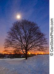 木, そして, 月, 上に, 冬の景色