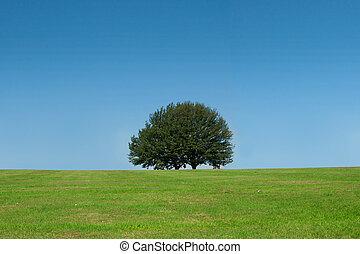 木, ただ1つだけである