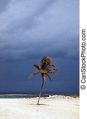 木, やし, 雲, 嵐である, sunlit