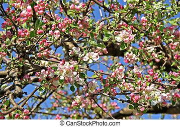 木, アップル, カニ