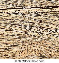木, イラスト, section., 木製の肉質, ブラウン, 交差点, ベクトル