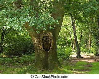 木, オーク, 古い, 森林, 英語